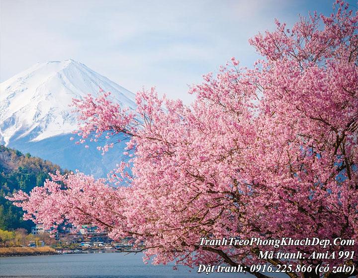 AmiA 991 với cảnh hoa anh đào nở rất đẹp trên hồ Kawaguchi