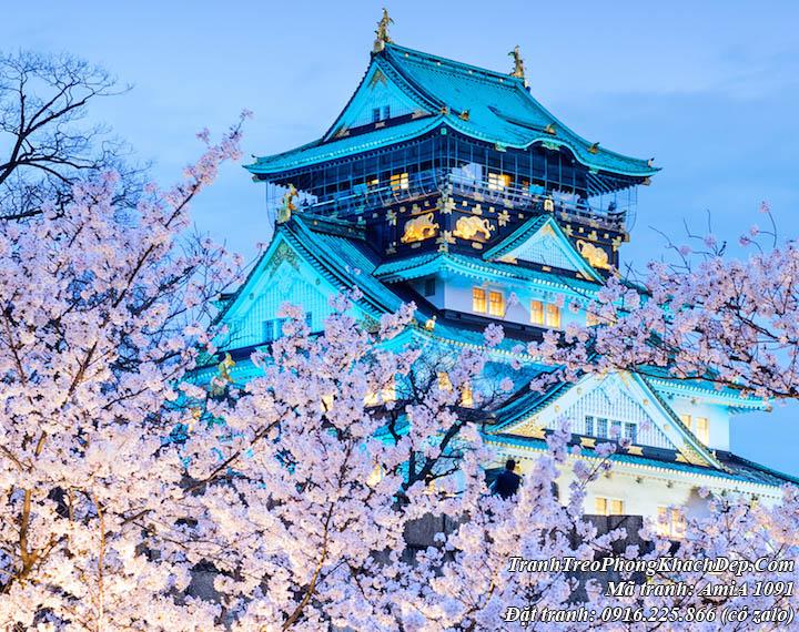 Tranh thành Osaka Nhật Bản và hoa anh đào AmiA 1091