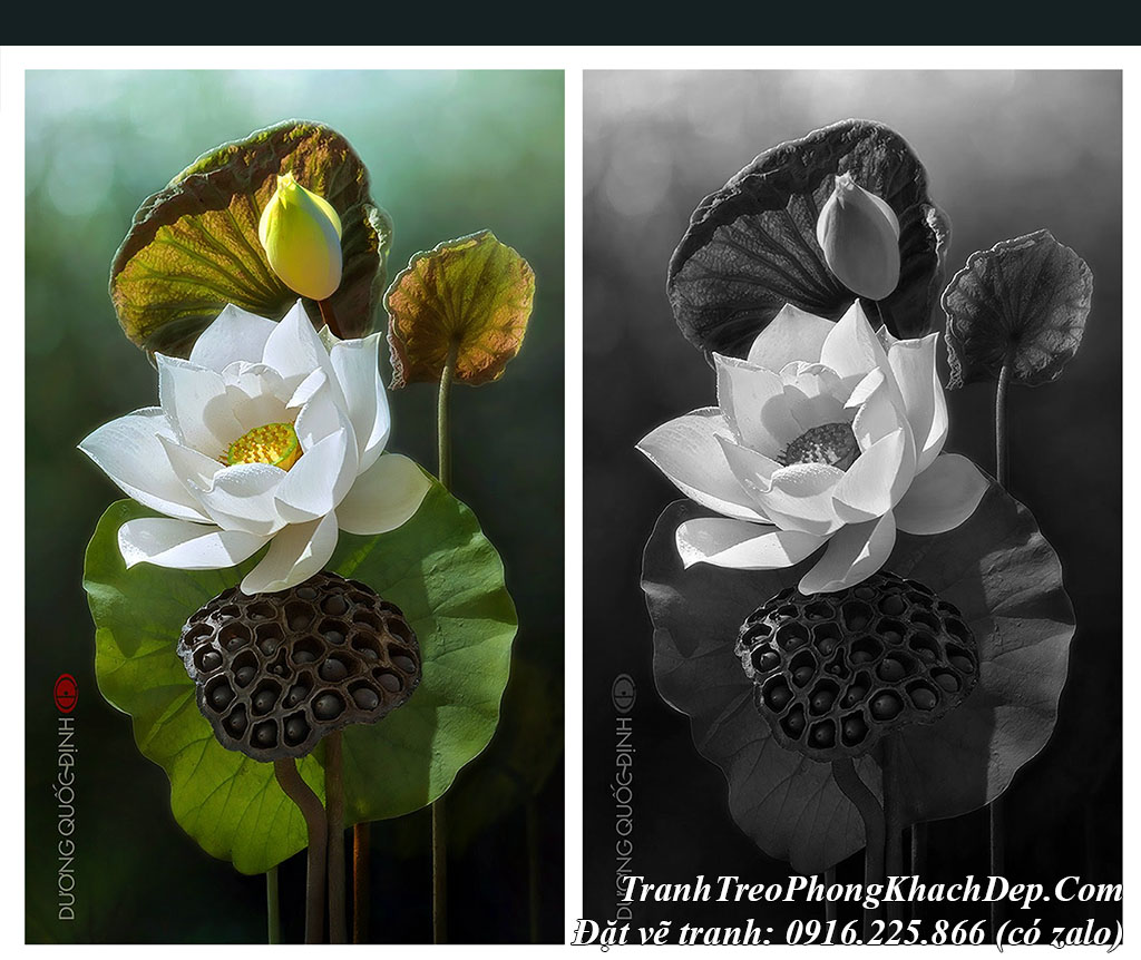 Tranh hoa Sen sơn dầu nghệ thuật tại AmiA