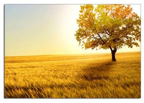Tranh một tấm cây lá vàng mùa Thu AmiA 2011