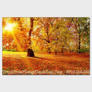 Tranh AmiA 485071404 ánh nắng mùa Thu trong rừng