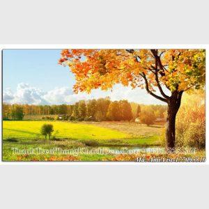 Tranh cảnh đẹp Amia Tranh phong cảnh cây lá vàng mùa Thu Amia 177095310 cây lá vàng mùa thu
