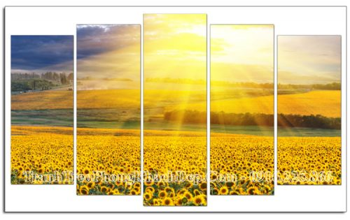 Tranh AmiA OP14258085 phong cảnh đẹp đồng hoa hướng dương