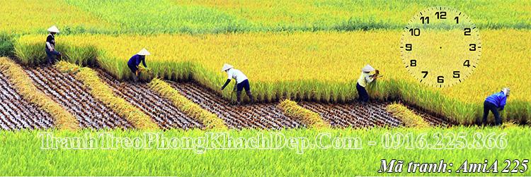 Tranh AmiA 225 phong cảnh quê hương gặt lúa trên đồng